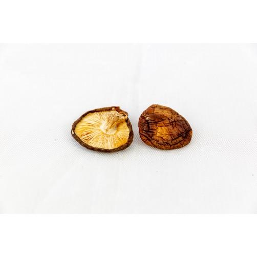 台灣香菇(中開)